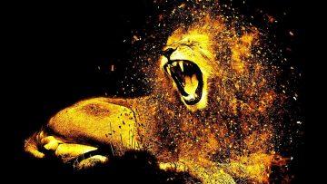 פנגר 8211 תהיה אריה תפסיק לרחם על עצמך אל תשכח שאתה אריה