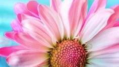 flower-3140492_1920